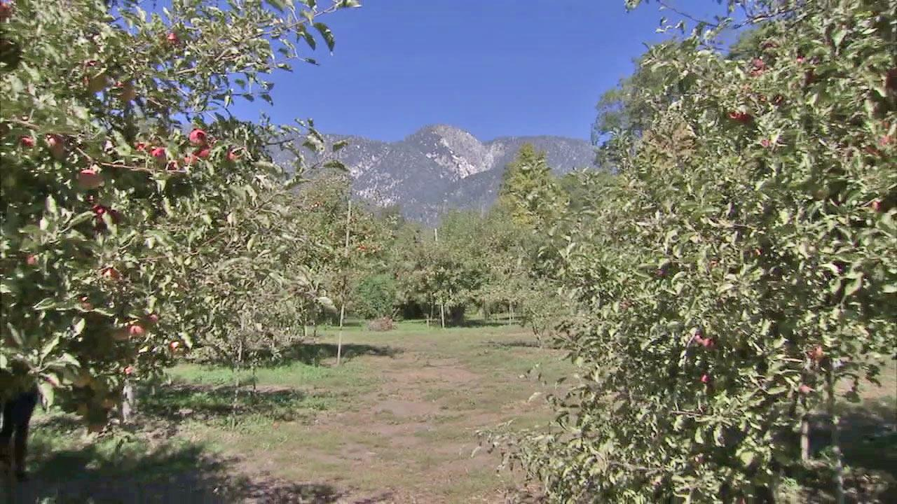 Surrounded by the San Bernardino Mountains and nestled nearly a mile above sea level are the orchards of Oak Glen.