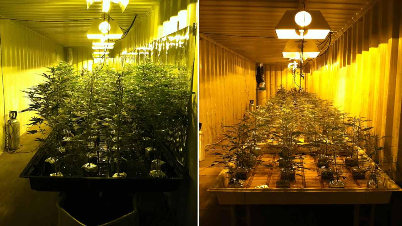 Authorities seized 1,800 marijuana plants and five firearms after serving a search warrant at a building in Adelanto Friday, Dec. 21, 2012.