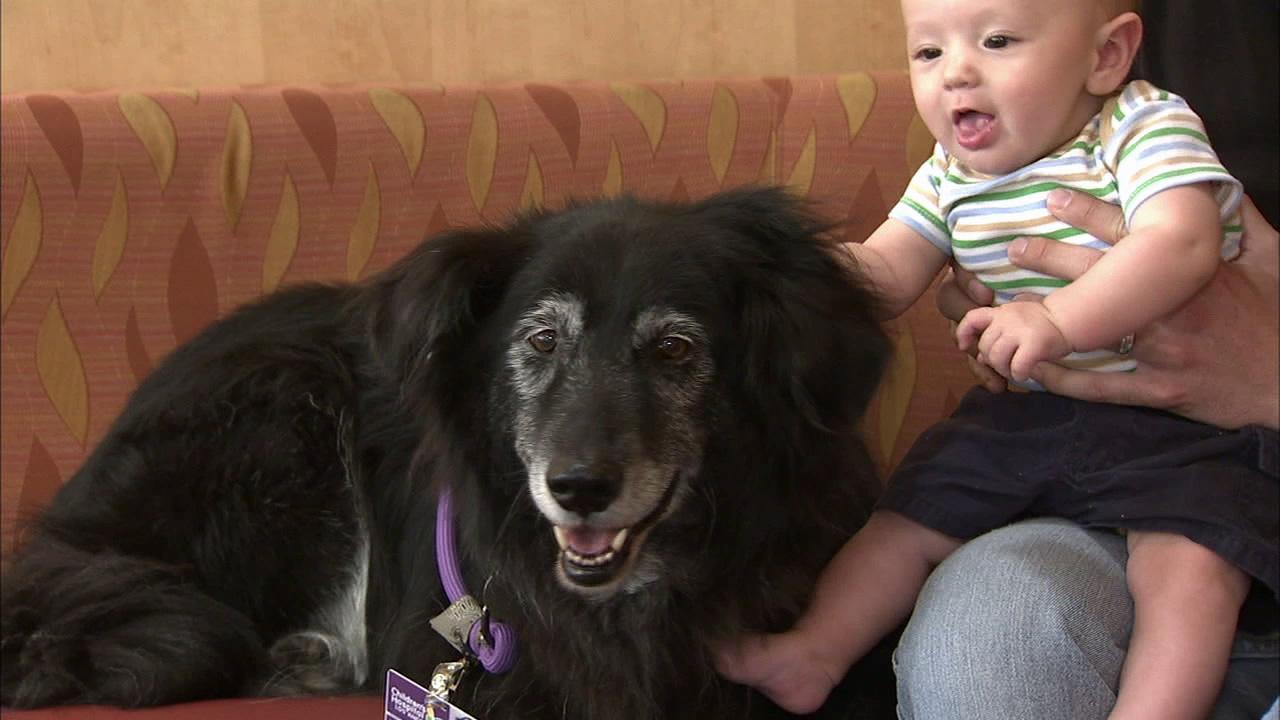 A baby is seen with a dog in this file photo.