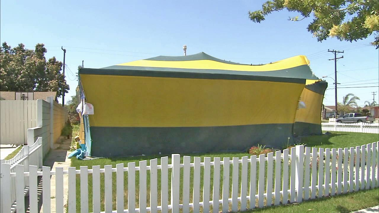 A house tented for fumigation is seen.