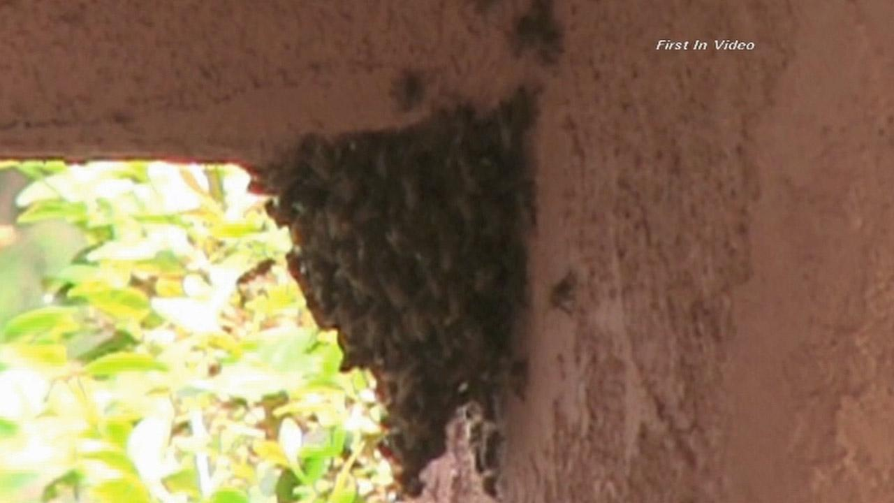 A swarm of bees attacked and killed a dog in the 1500 block of Cumpston Street in North Hollywood.