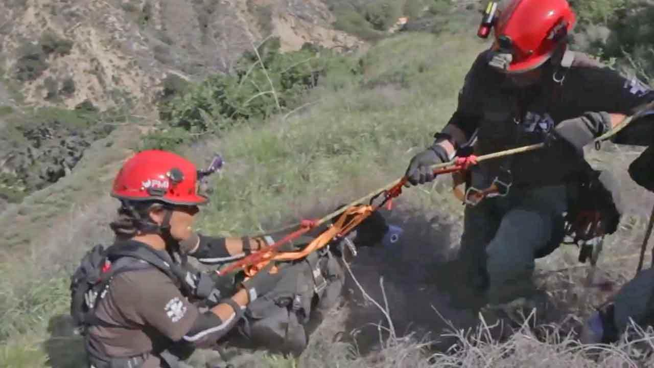 A large dog stranded in a steep hill near OMelveny Park in Granada Hills was rescued by Los Angeles Animal Services Sunday, April 20, 2014.