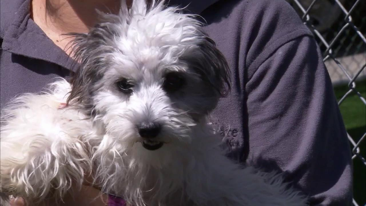 More than two dozen dogs were abandoned in two crates at a Laguna Hills park in May 2012.