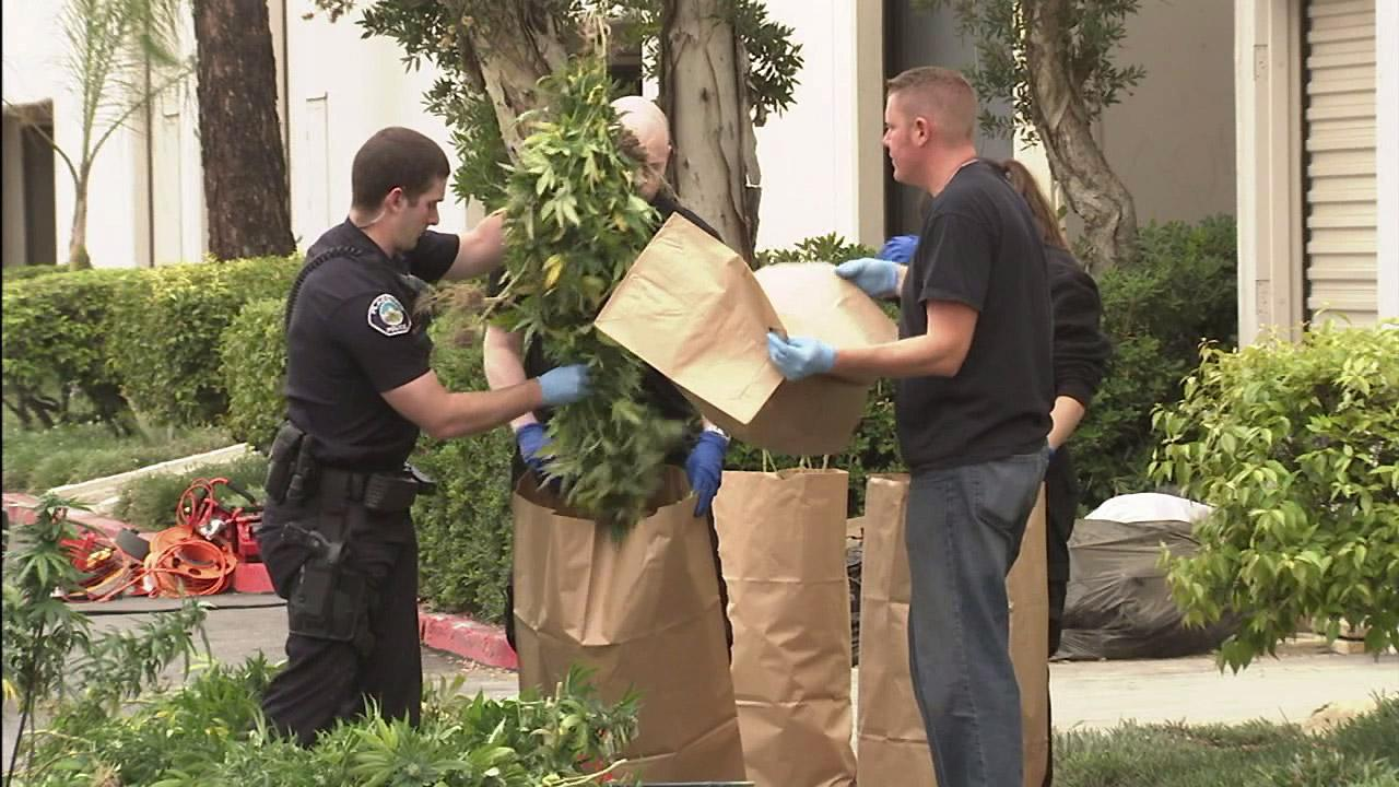 Officers are seen bagging up marijuana plants that were found in a building in Placentia where a marijuana growing operation was discovered following a fire on Monday, June 2, 2012.