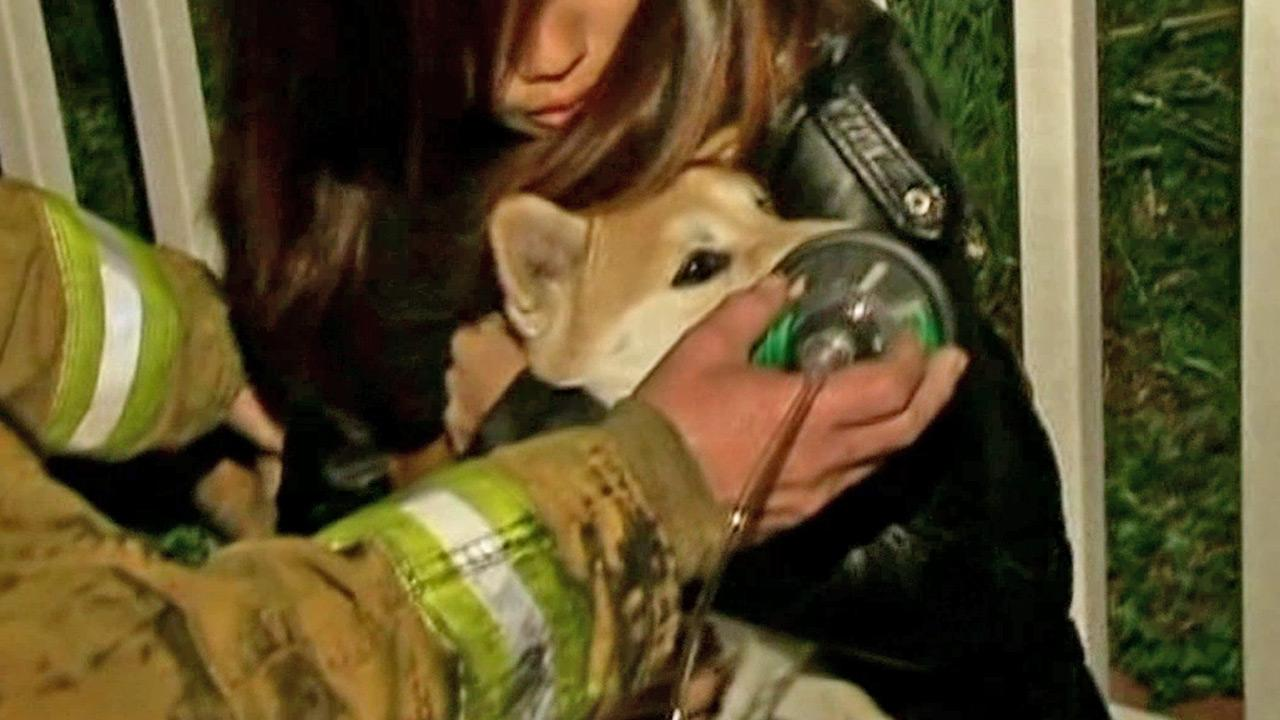 An Anaheim family and their pet were rescued by firefighters when their house caught fire on Friday, Dec. 21, 2012.