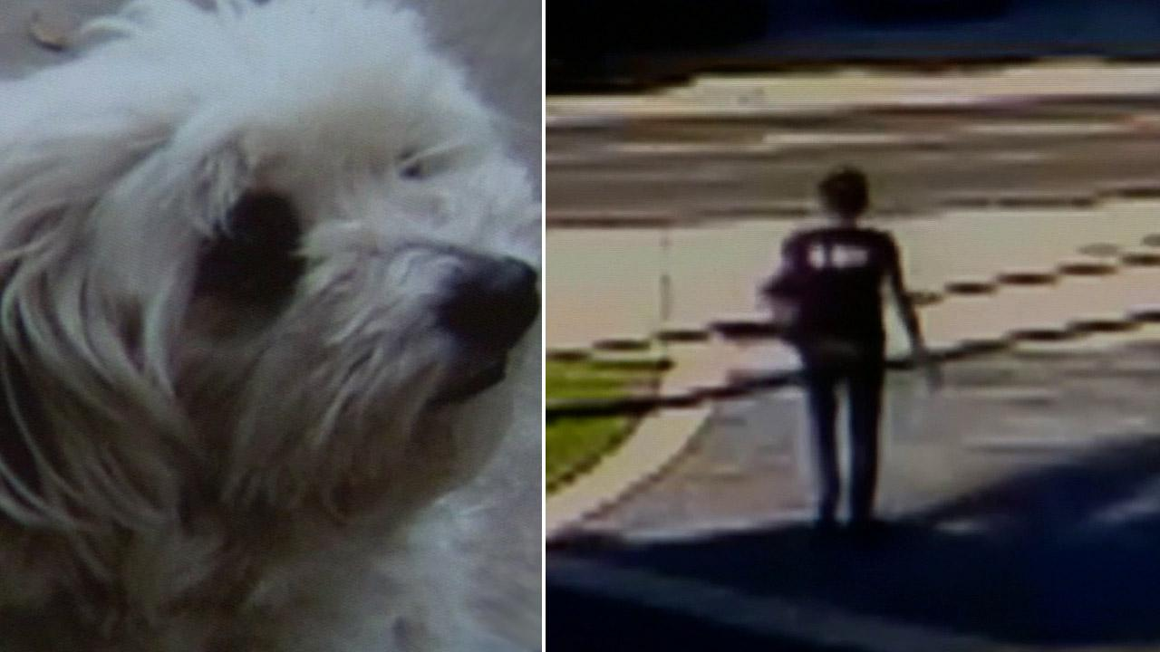 A Tustin familys dog, Bubba-Lulu, was allegedly taken from their home by a woman in broad daylight.