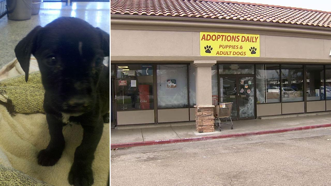 Animal rescue officials seized sick pets from a storefront known as Healing Hearts Animal Rescue in the 600 block of East Los Angeles Avenue in Simi Valley.