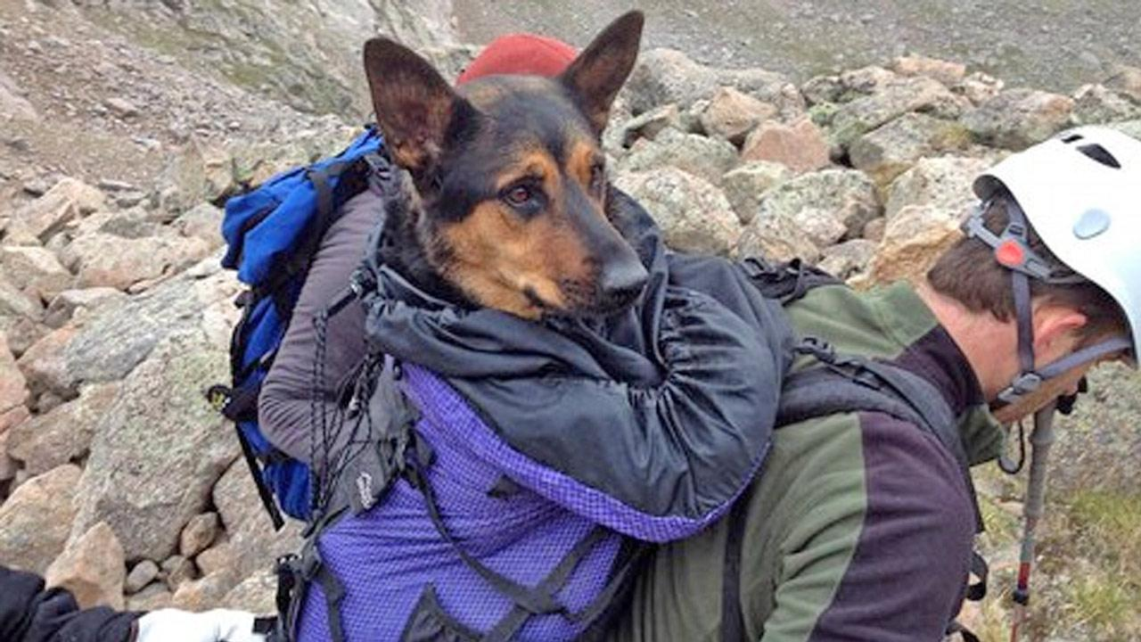Rescuers carry Missy the German Shepherd down a mountain in Colorado, after the dog was abandoned there by his owner.