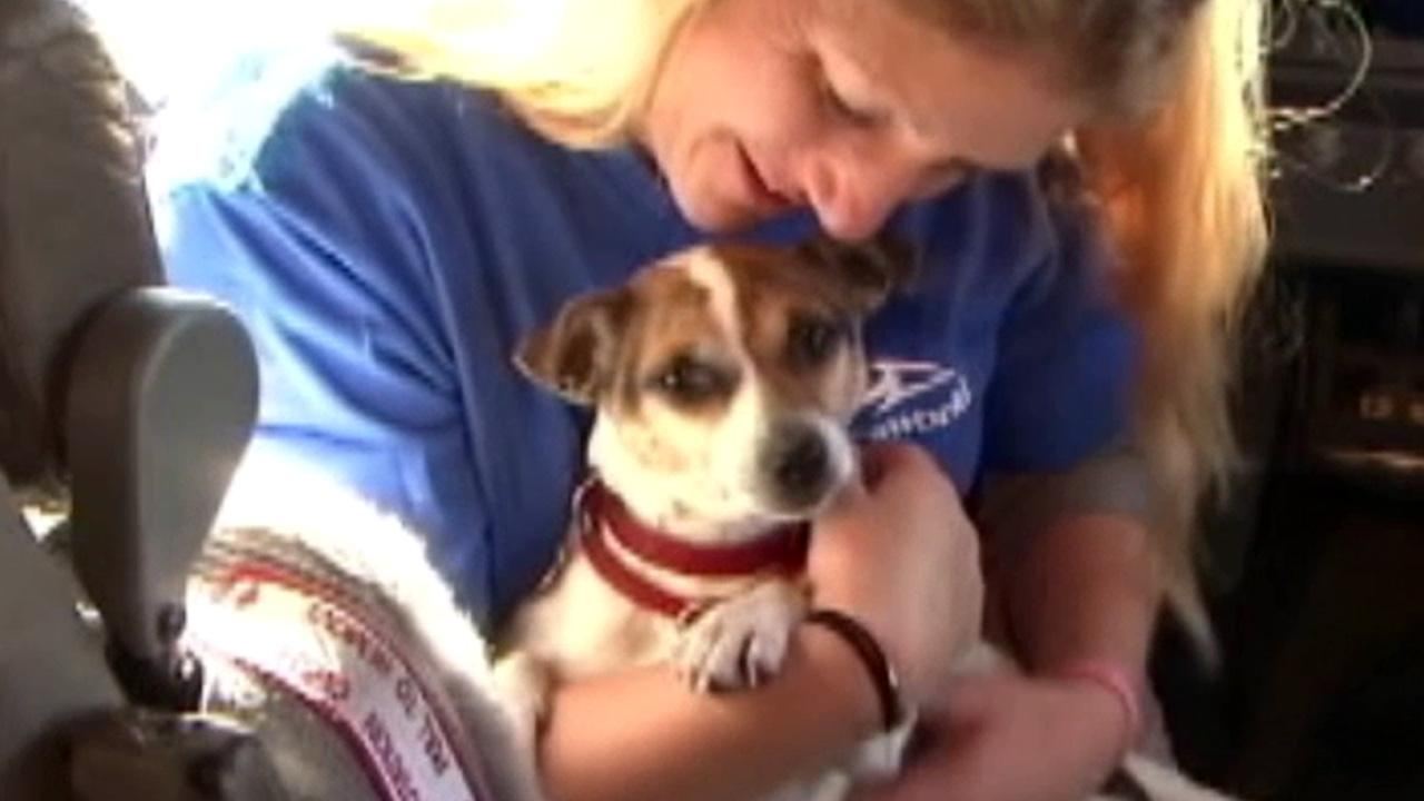 A dog displaced by Superstorm Sandy is shown in this November photo.