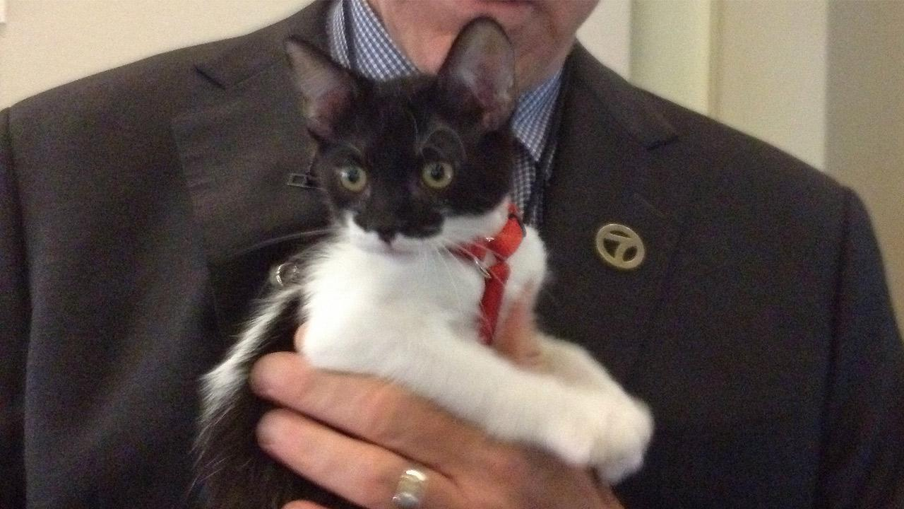 Our Pet of the Week on Thursday, a 3-month-old kitten named Kramer (pictured here), was adopted, but his brother and sister are still available.