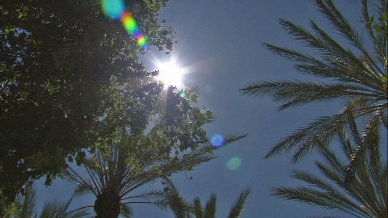The sun shines through some palm trees in Southern California in this undated file photo.