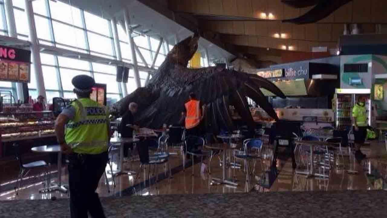 A giant eagle sculpture in Wellingtons airport, placed there to promote director Peter Jacksons movie trilogy The Hobbit, fell from its overhead perch to the floor following a 6.3-magnitude earthquake in New Zealand Sunday, Jan. 19, 2014.