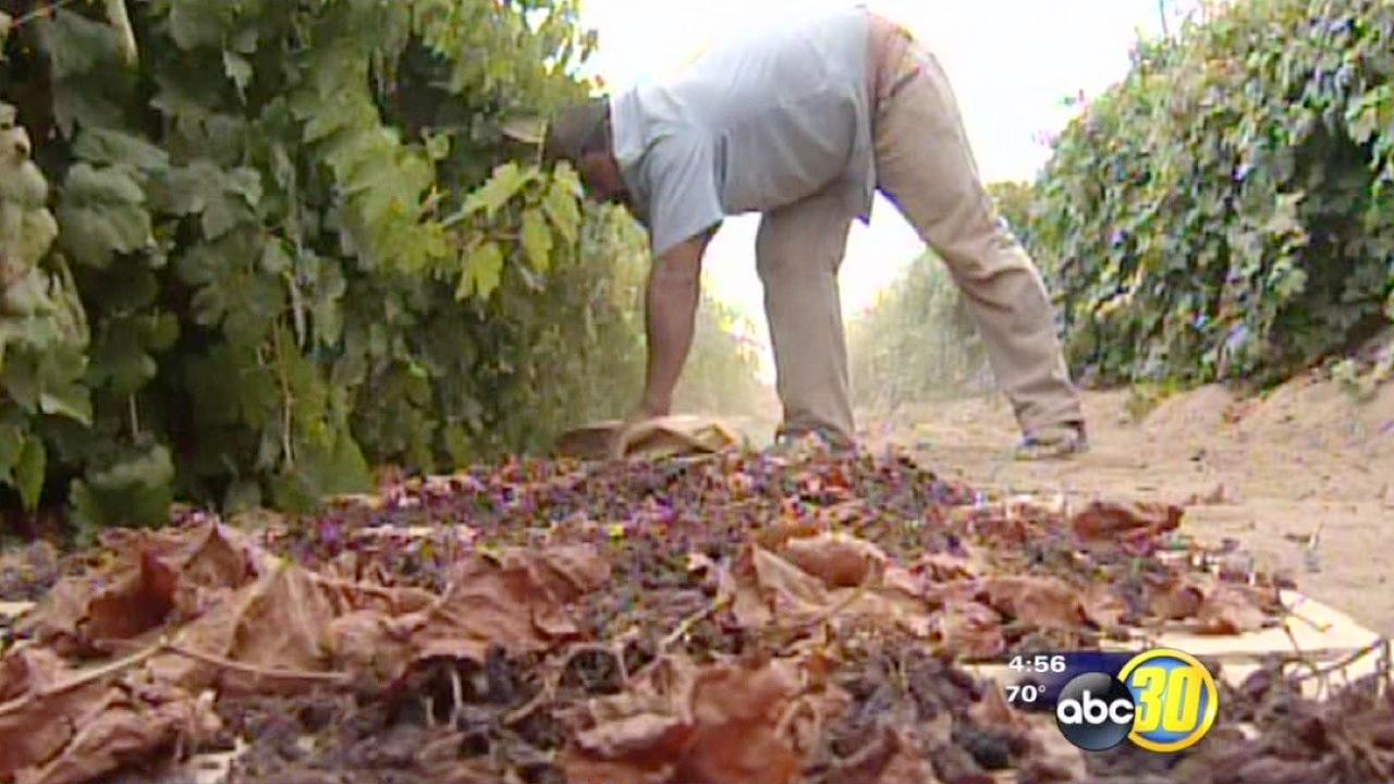 Labor shortage causes farm worker wage increase