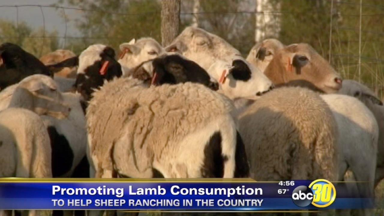 California sheep ranchers face high costs, competition