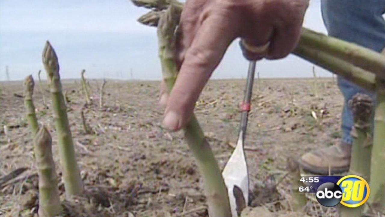 Asparagus demand goes up as supply shrinks