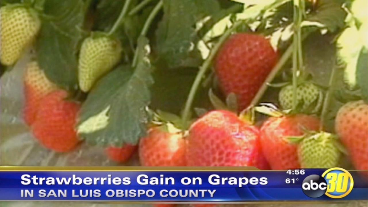 Strawberries take top crop in San Luis Obispo County