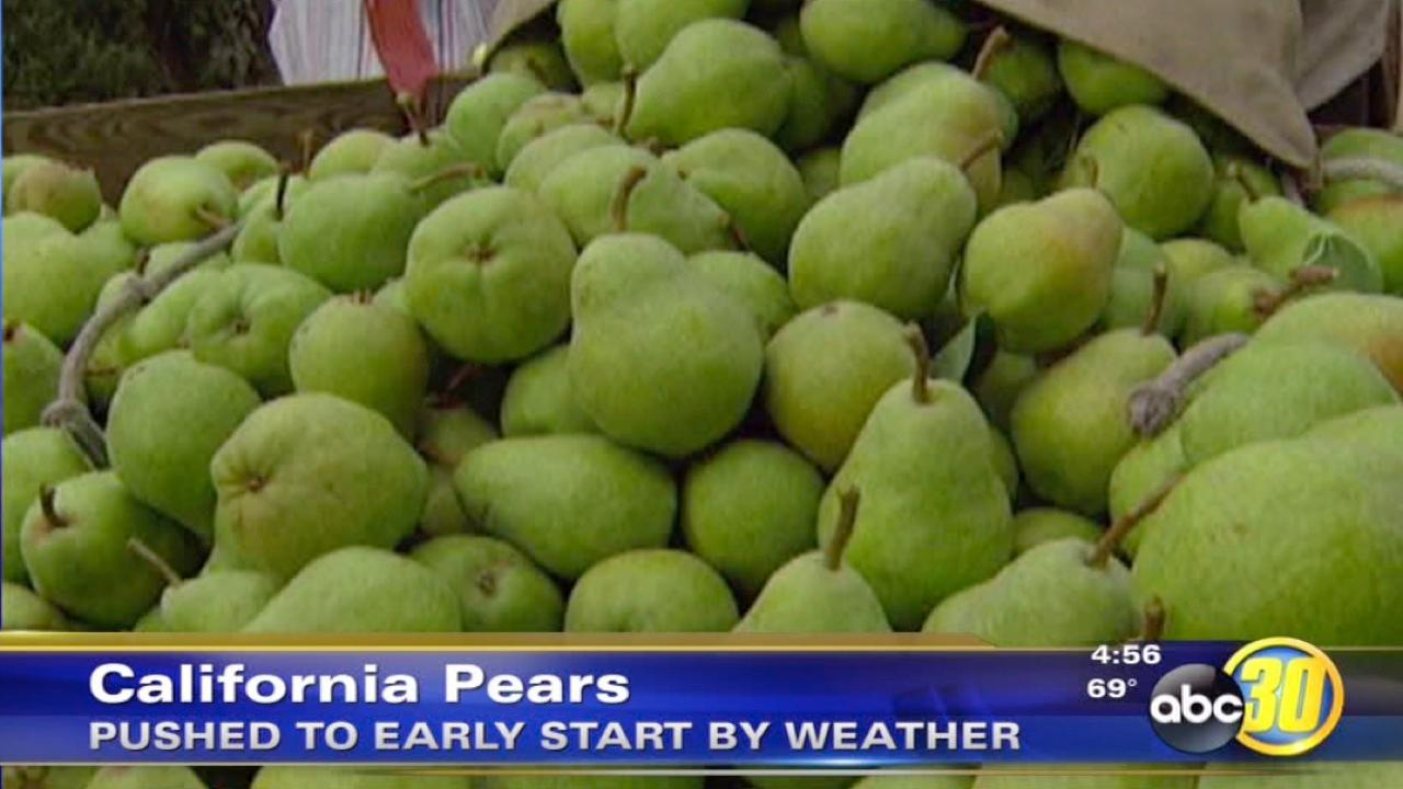 Warm weather is pushing California pears to an early start