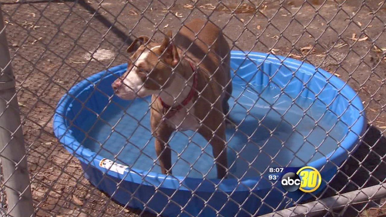 Heat wave causes concerns at Selma Animal Shelter