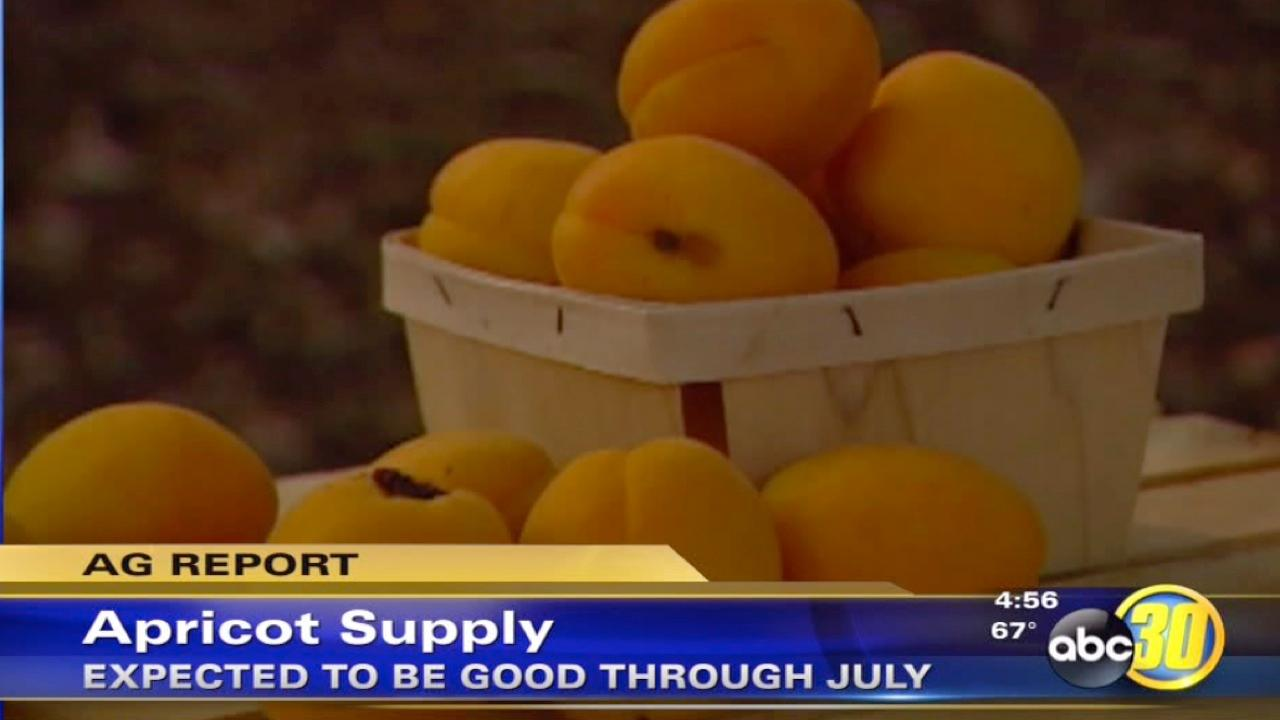 Apricot growers in California are expecting a big year