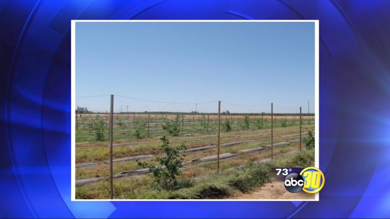 Pot grow busted in Madera County