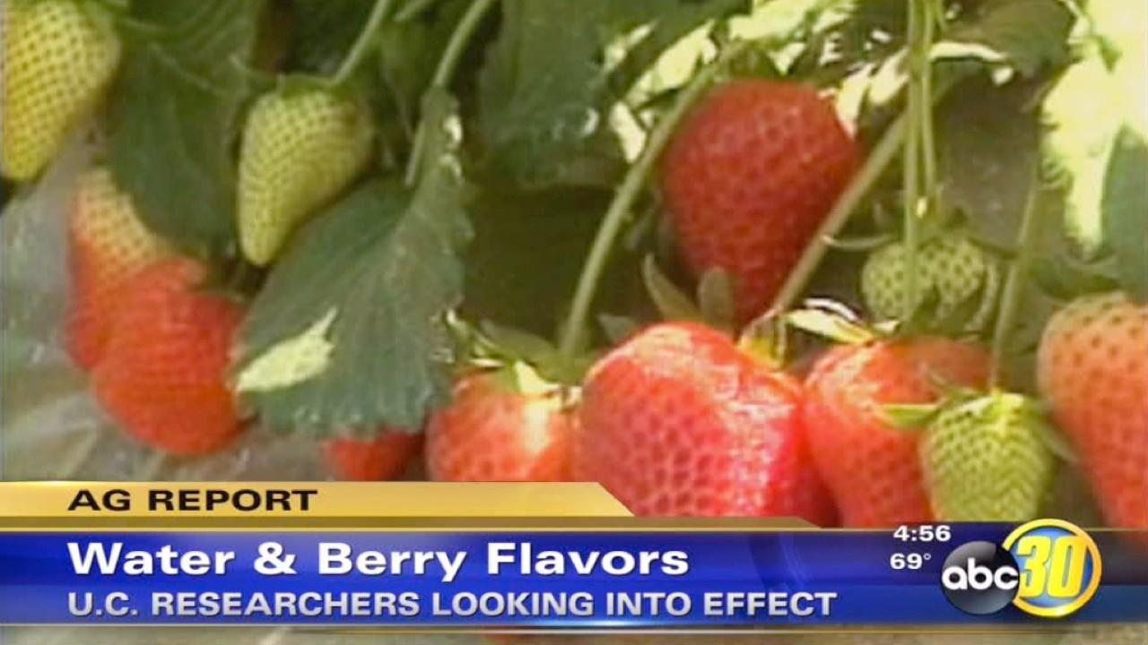 Researchers study berry flavor