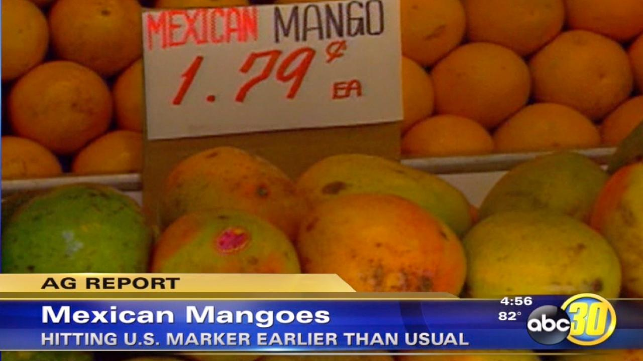 Mexican mangoes get an early start in the U.S.