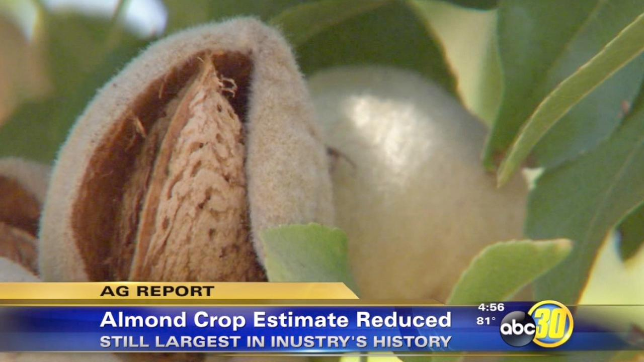 California almond crop estimate has been reduced