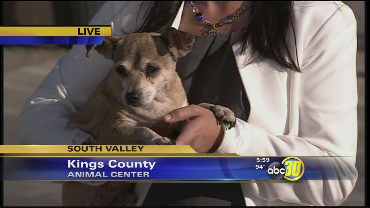 40 dogs found living under a Hanford woman's bed