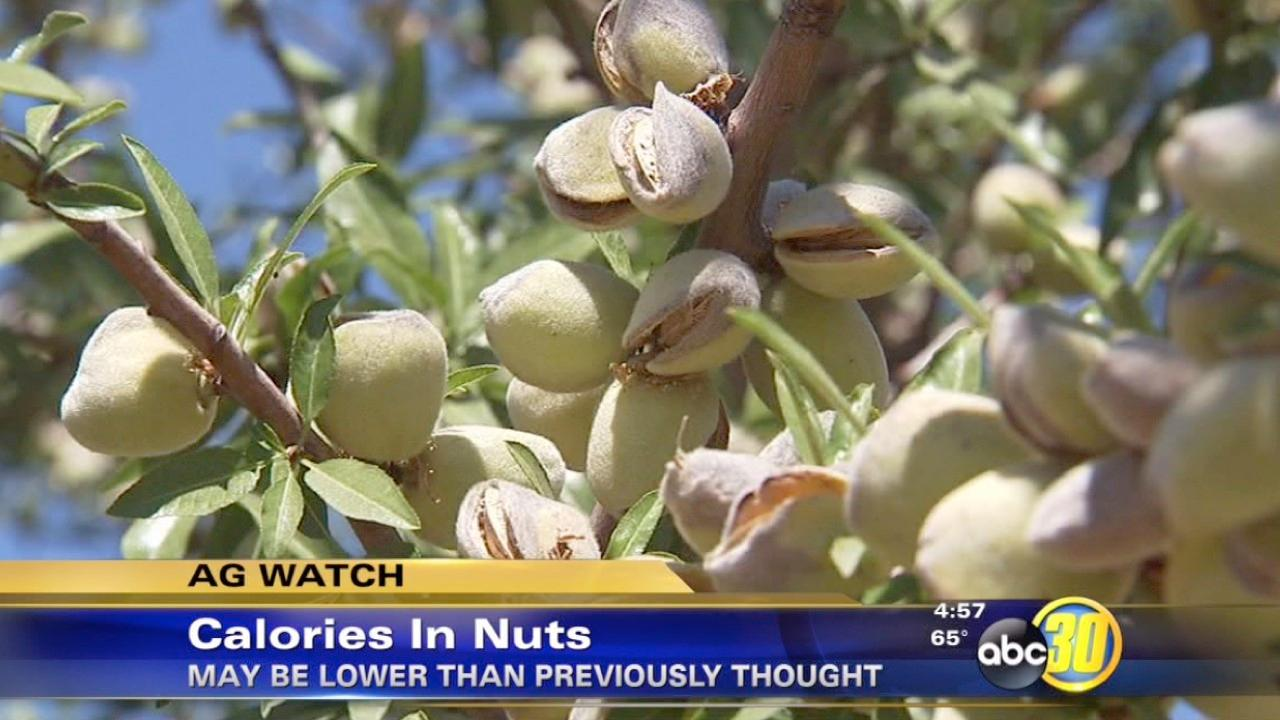 Nuts may have fewer calories than previously thought