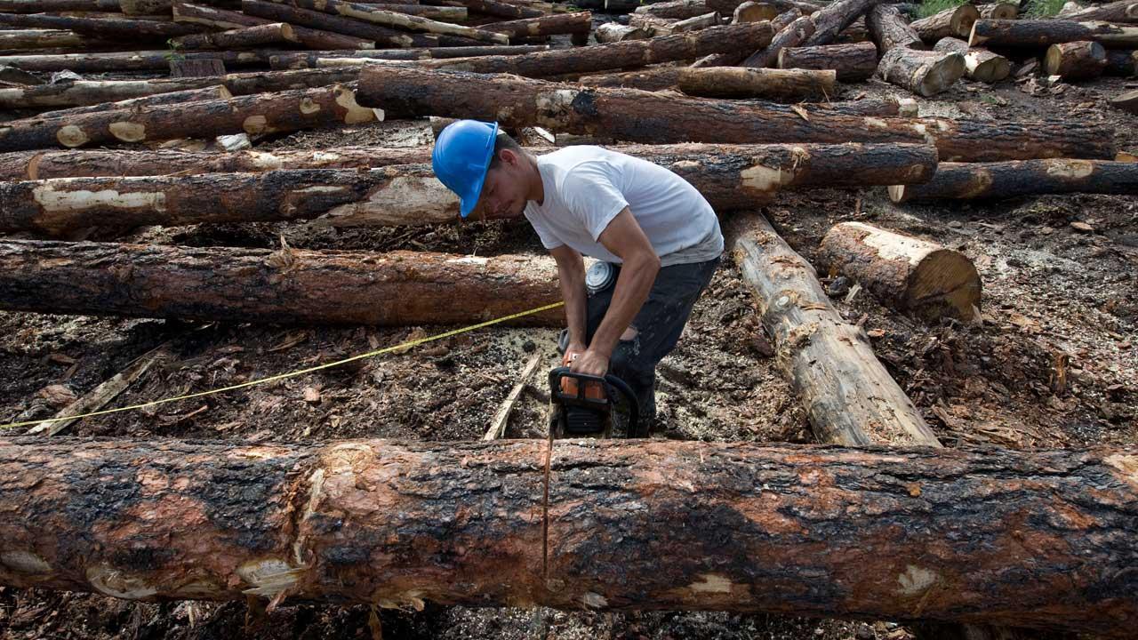 Bo Burns cutting logs at K&B Timberworks Inc. in Reserve, N.M.