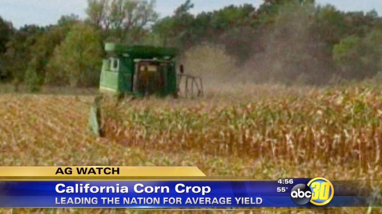 California reports highest average corn yield in the United States