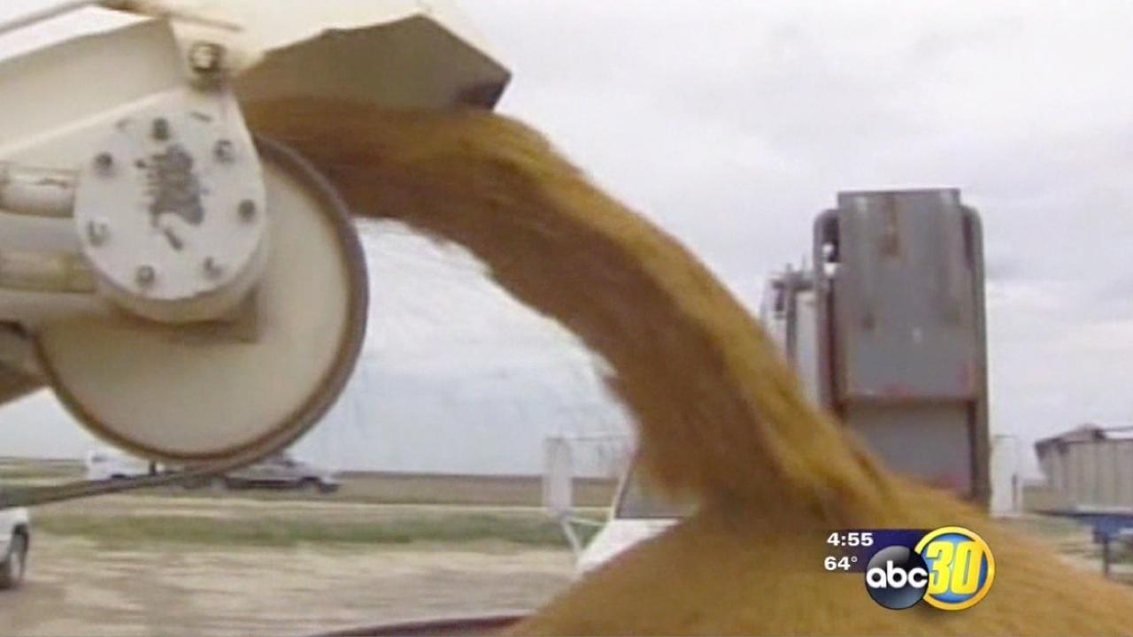 California rice harvest is now underway