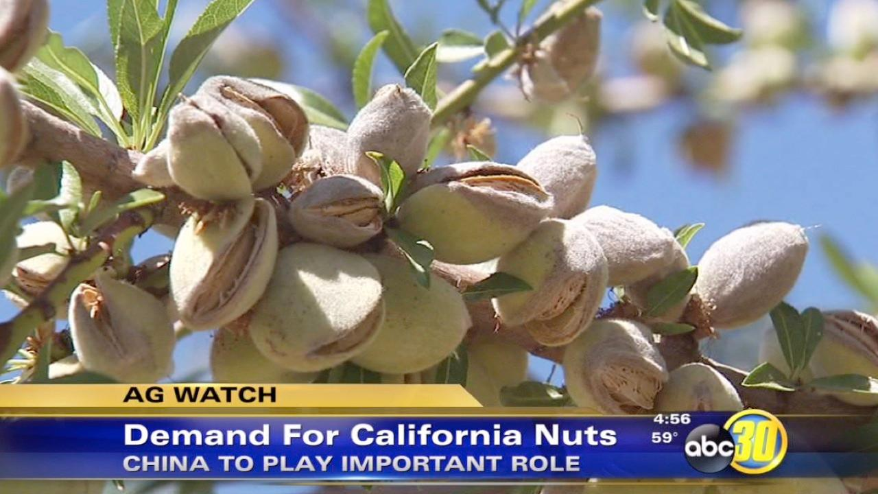 California nut exports on the rise