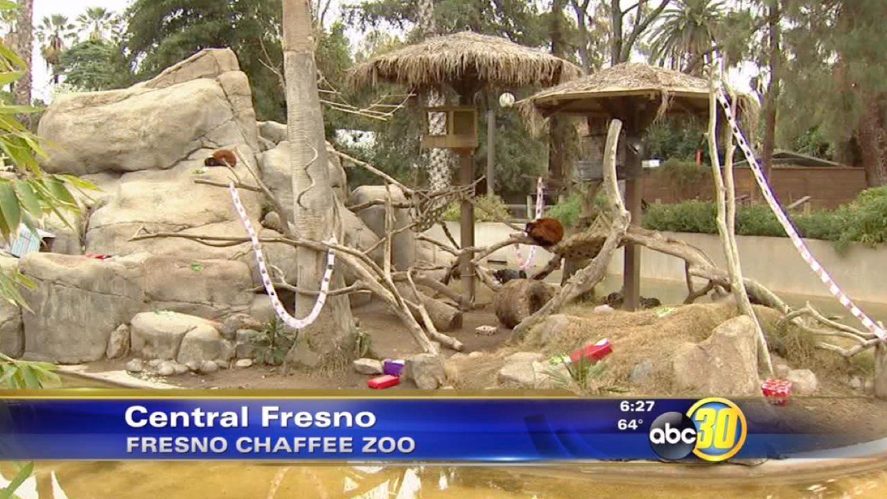 Fresno Chaffee Zoo animals celebrate Valentine's Day