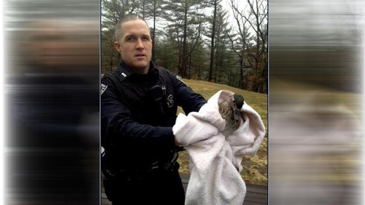 Duck detained for breaking into a Massachusetts home