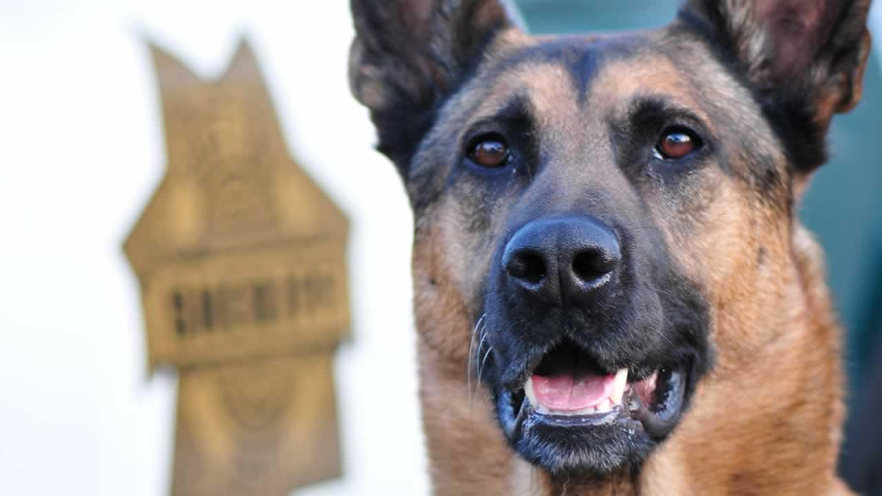 The Santa Cruz Sheriffs Department is saying good-bye to one of its finest. Tomi the police dog is retiring after five years on the force.