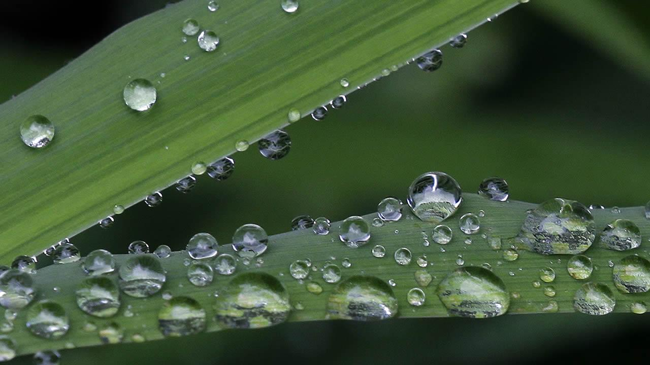 Raindrops cling to foliage in Chapel Hill, N.C., Sunday, Aug. 18, 2013. (AP Photo/Gerry Broome)