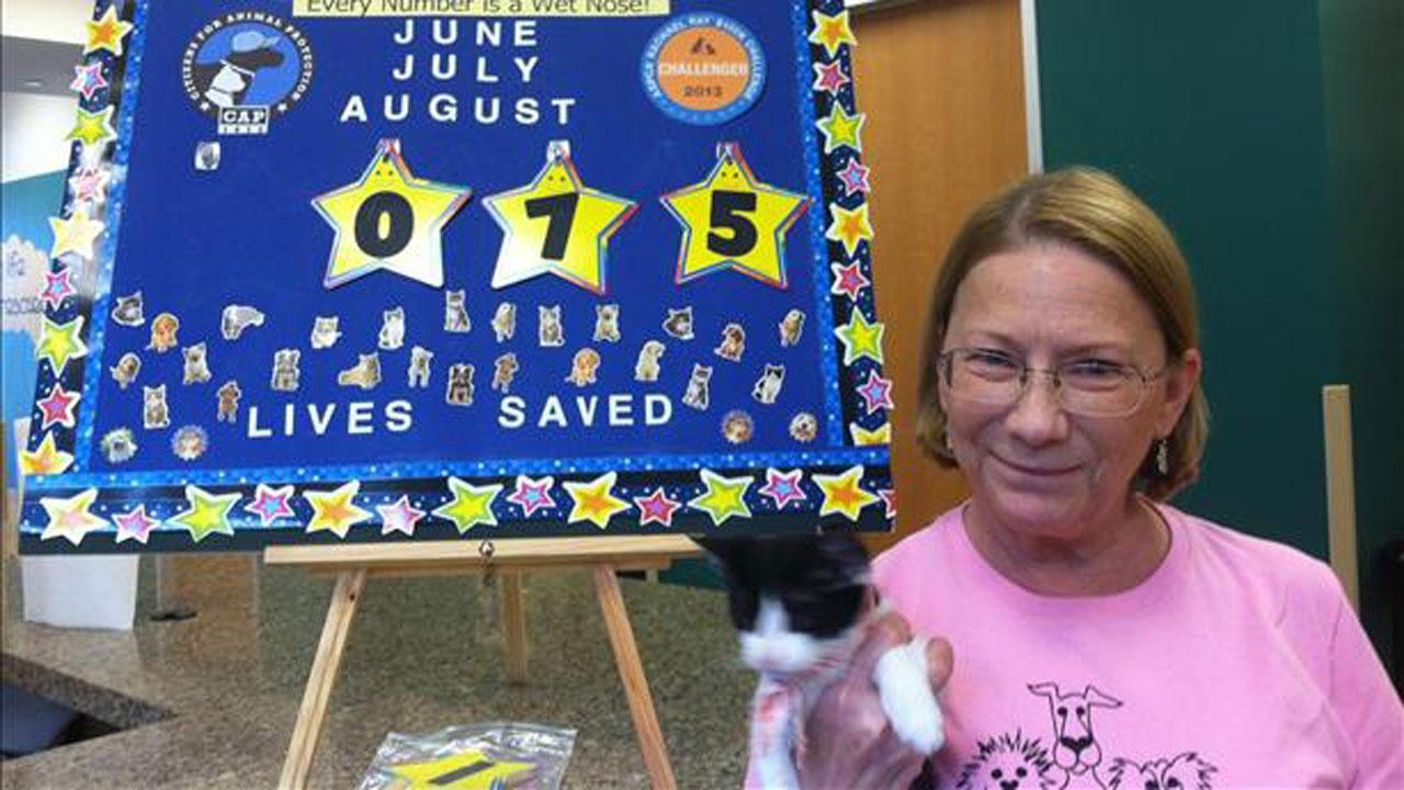 Citizens for Animal Protection is having a Pet-A-Fair adoption event. There are no adoption fees. This kitty was adoption number 75.