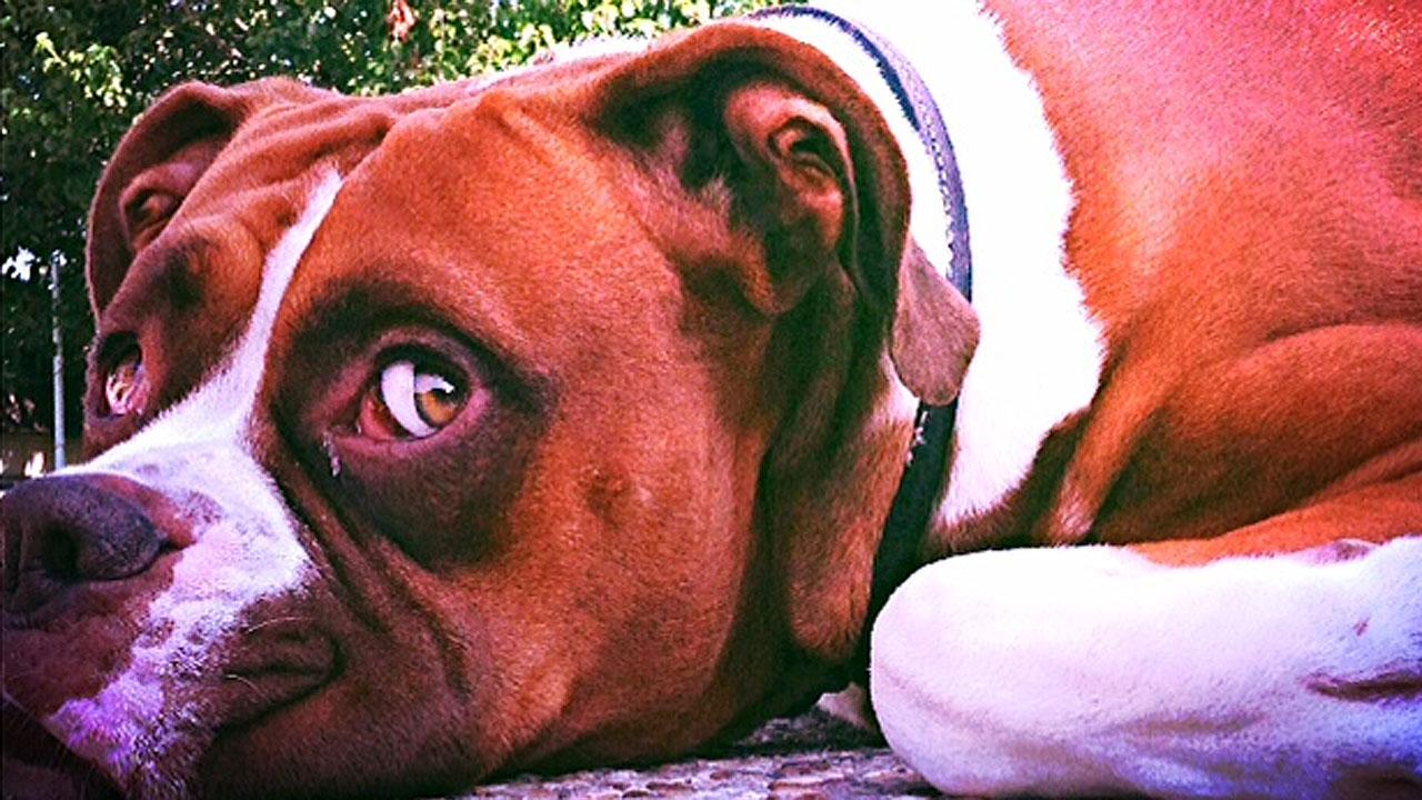 Family's pet dog fatally shot by off-duty police officer