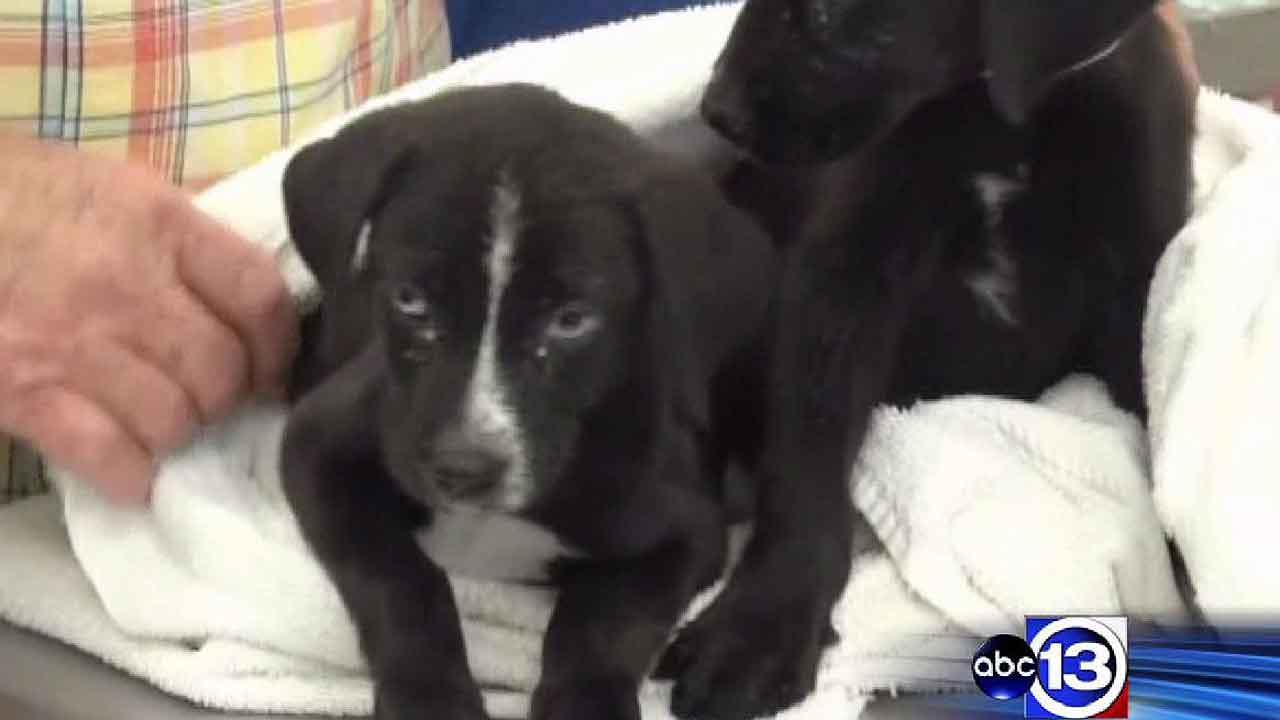 Puppies found dumped alive in trash bag in Montgomery County
