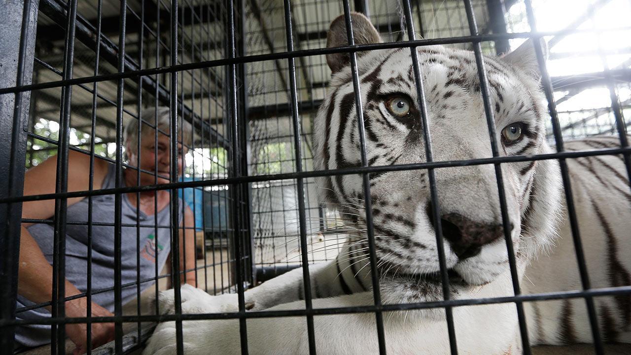 Animal sanctuary death