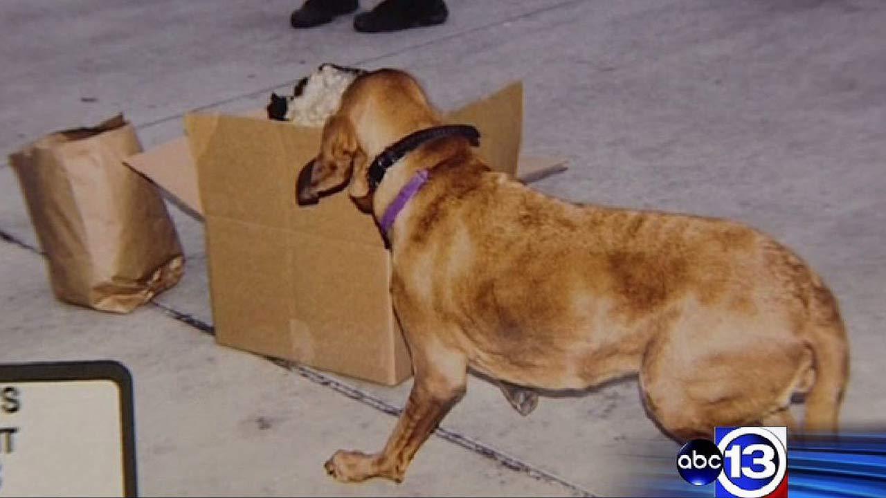 Cadaver dogs provide evidence in Mona Nelson capital murder trial