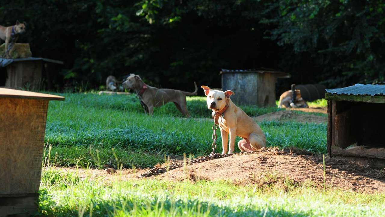 ASPCA Dog raid