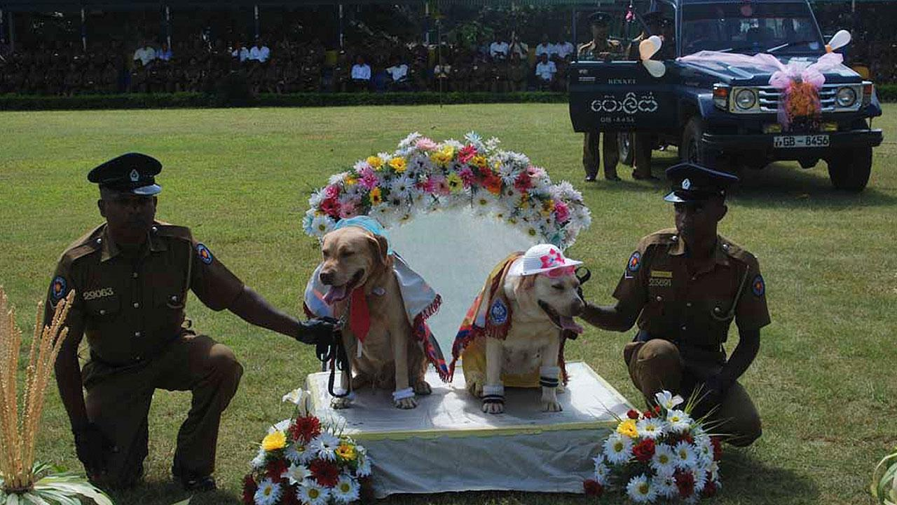 Dog wedding in Sri Lanka prompts police apology