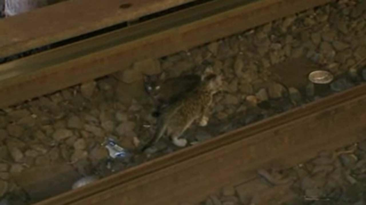 2 kittens that stopped NYC subway service found