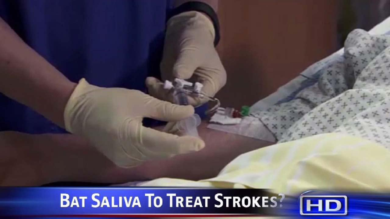 Researchers turn to bats for new stroke drug