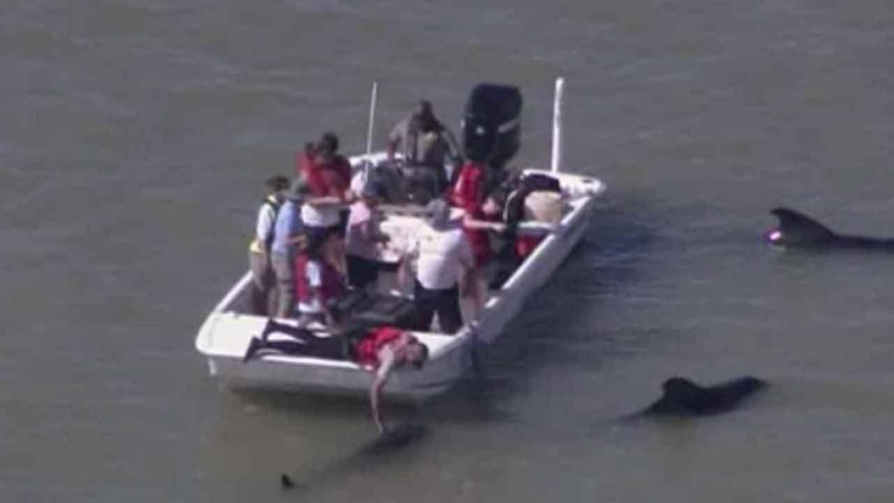 10 whales dead, dozens stranded in Everglades National Park