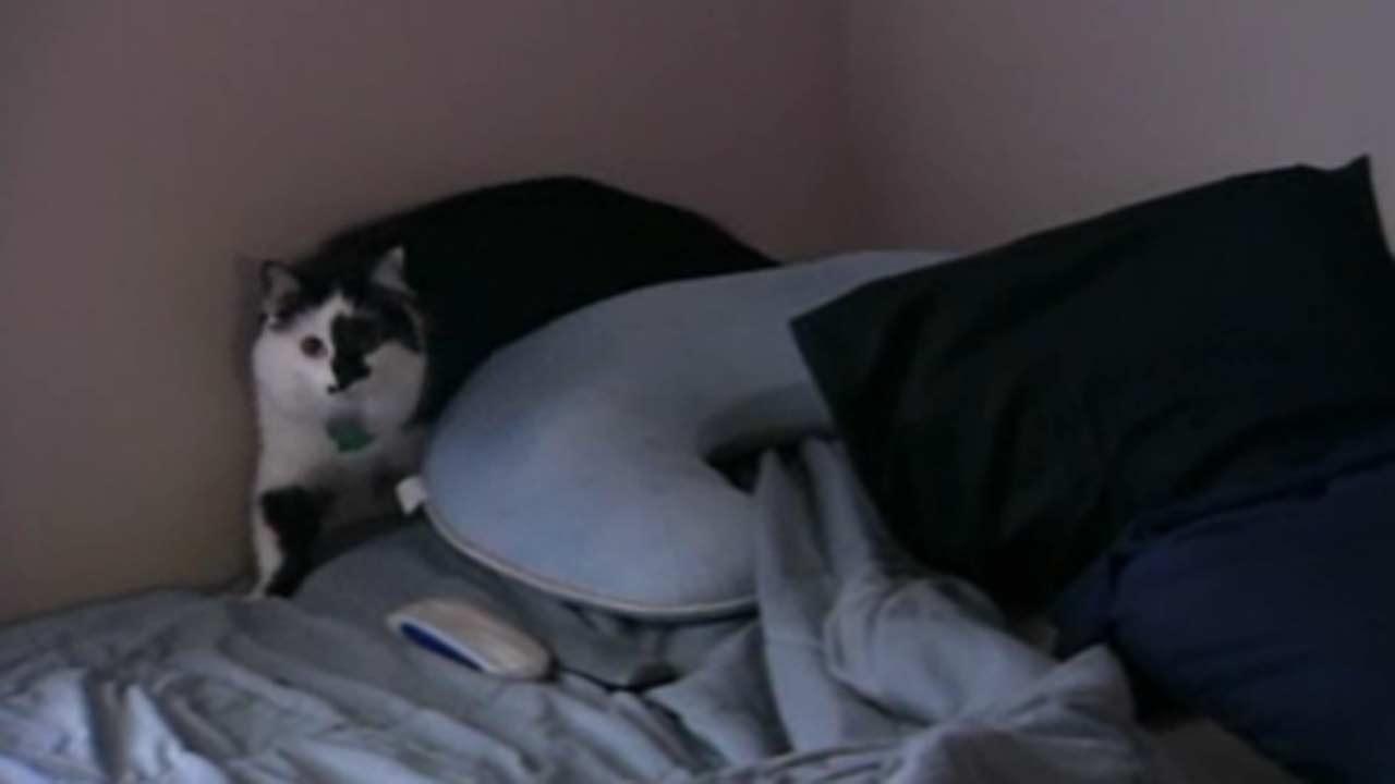 Therapist: Vicious Oregon cat misunderstood
