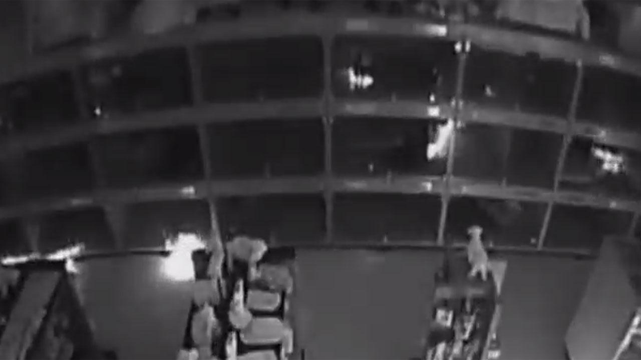Video shows suspects setting fire to store full of puppies