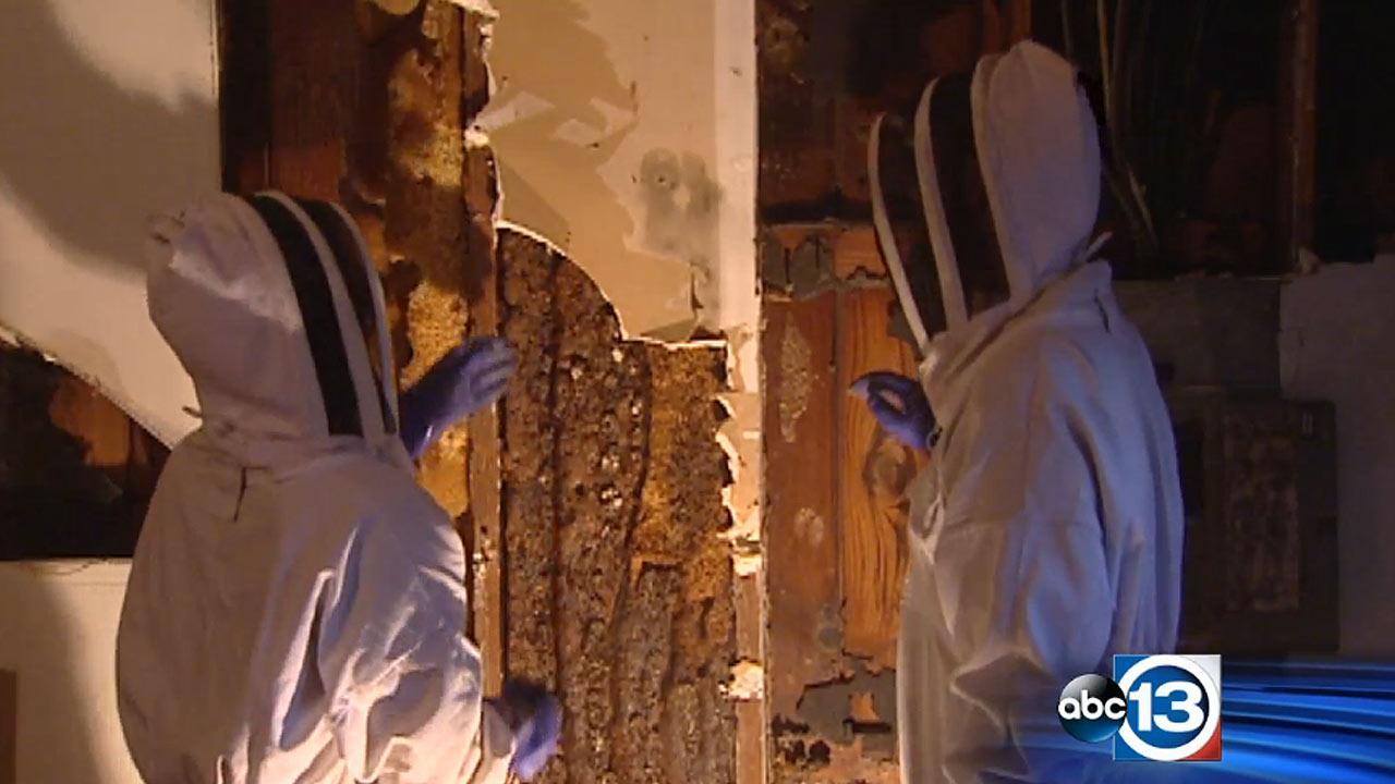 Bees inside garage wall
